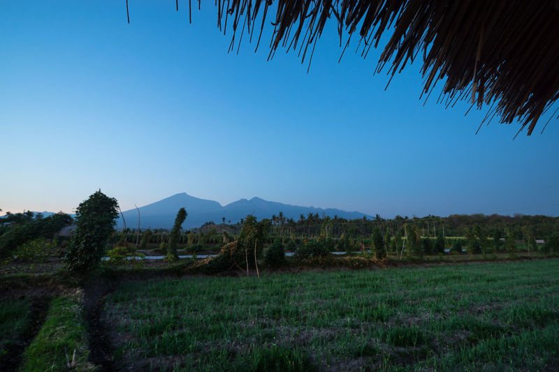 View of Mount Rinjani in early morning from Desa Sembalun, Lombok, Indonesia Lombok-Indonesia Paddy Field Relaxing Rinjani Mountain Rinjani National Park Rural Sunrise Tourist Attraction  Tranquility Travel Destinations
