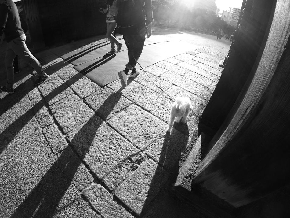 Dog Walking Gate Dog People Watching People Photography Light And Shadow Light Up Your Life Shadows Lines People Shadow OSAKA Snapshot Snapshots Of Life Streetphotography Capture The Moment October 2016 Black And White Monochrome 白黒写真 モノクロ EyeEm Best Shots - Black + White