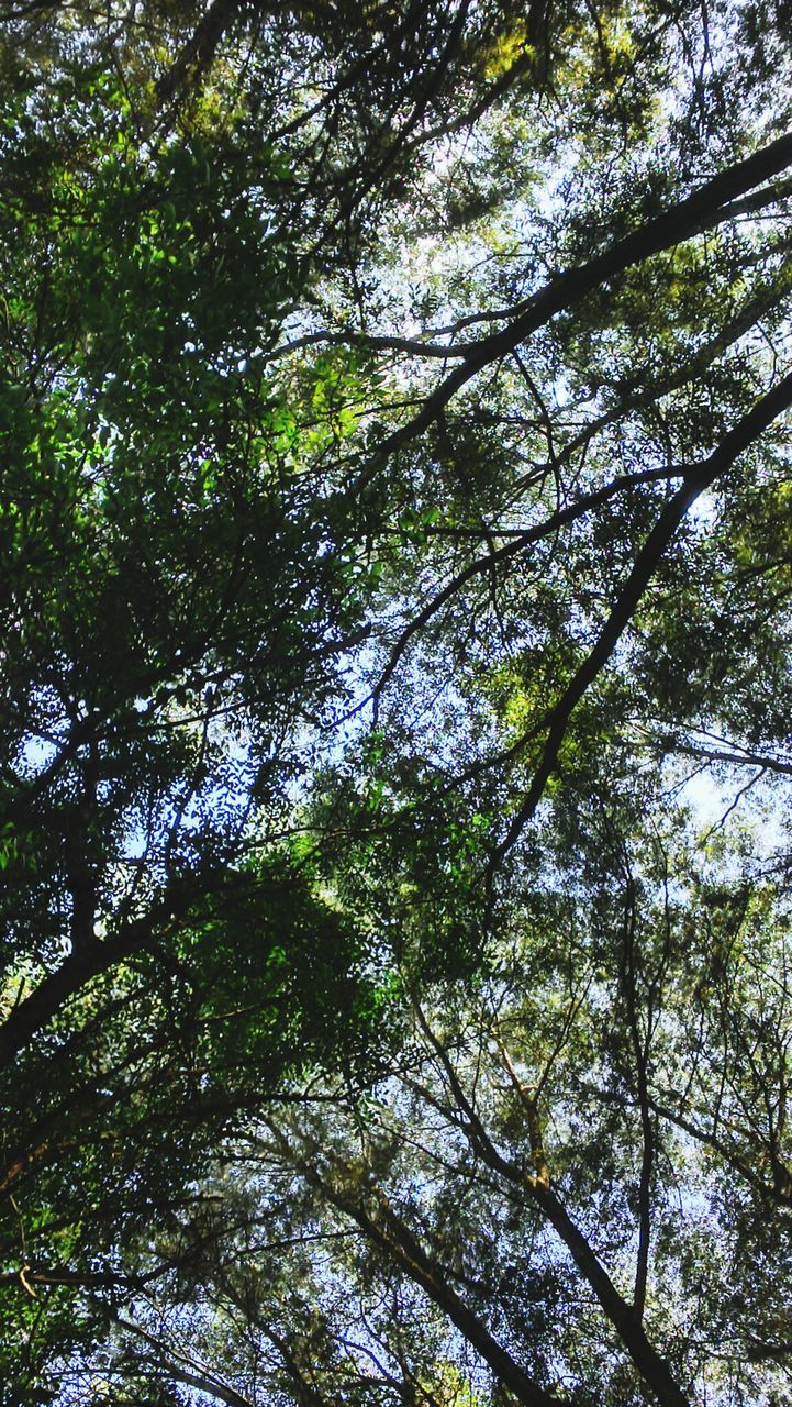 tree, low angle view, nature, growth, forest, beauty in nature, tranquility, day, outdoors, green color, no people, tranquil scene, branch, scenics, backgrounds, sky