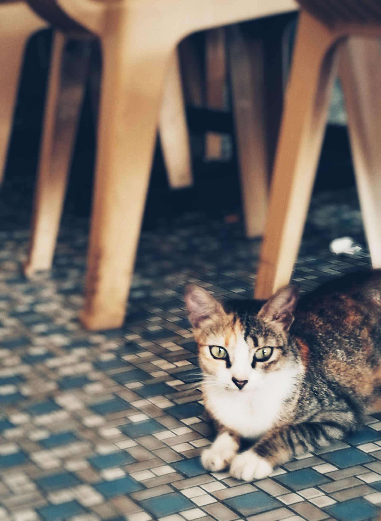 Pets Domestic Animals Domestic Cat One Animal Animal Themes Animal Indoors  Mammal Cat Huawei P9 Plus Homeless Cats Huaweiphotography Homeless HuaweiP9 Homeless Animal Homeless Cat Hua Wei P9 Plus Homelessness  Homeless Kitten
