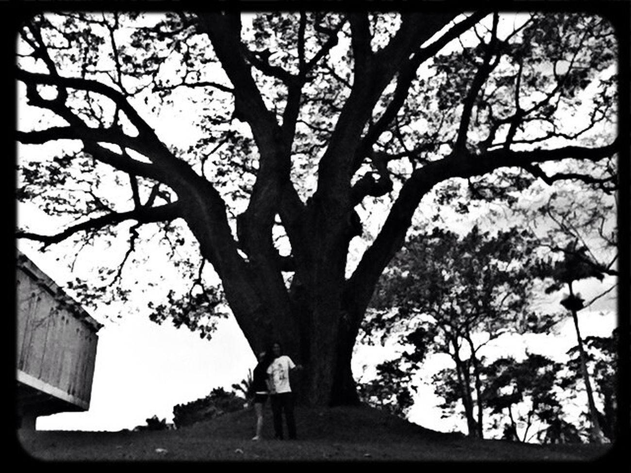 Blackandwhite Trees TreePorn #landscape #nature #photography