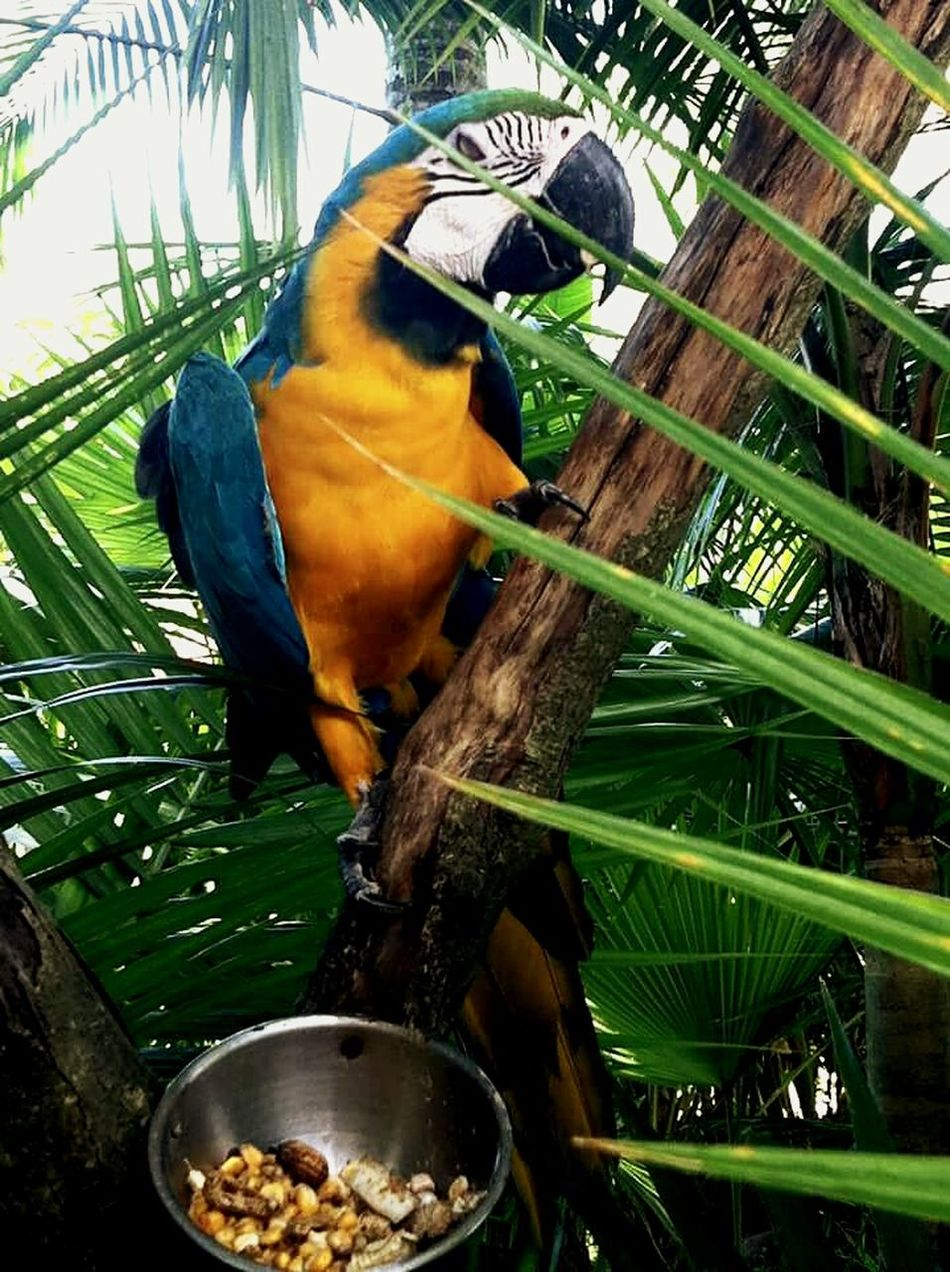Parrots Bird Photography Balibirdpark Animal Photography Color Portrait Belajarfotografer