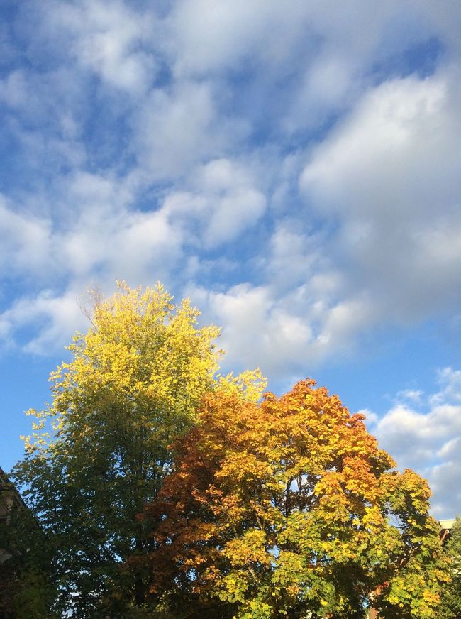 Autumn Trees Sky Cloud - Sky Beauty In Nature Low Angle View Change No People Day Tranquility Treetop