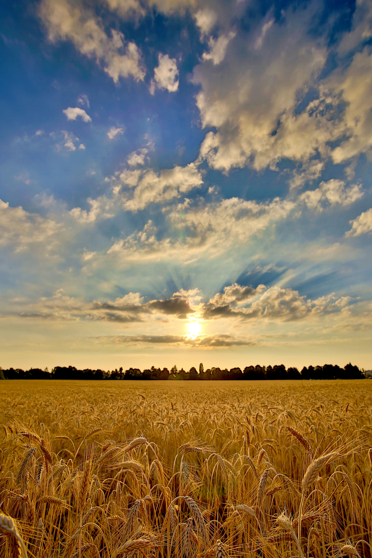 Agriculture Beauty In Nature Cereal Cereal Field Cereal Plant Cloud - Sky EyeEmNewHere Field Landscape Nature Outdoors Rural Scene Scenics Sky Sunset Wheat Wheat Field