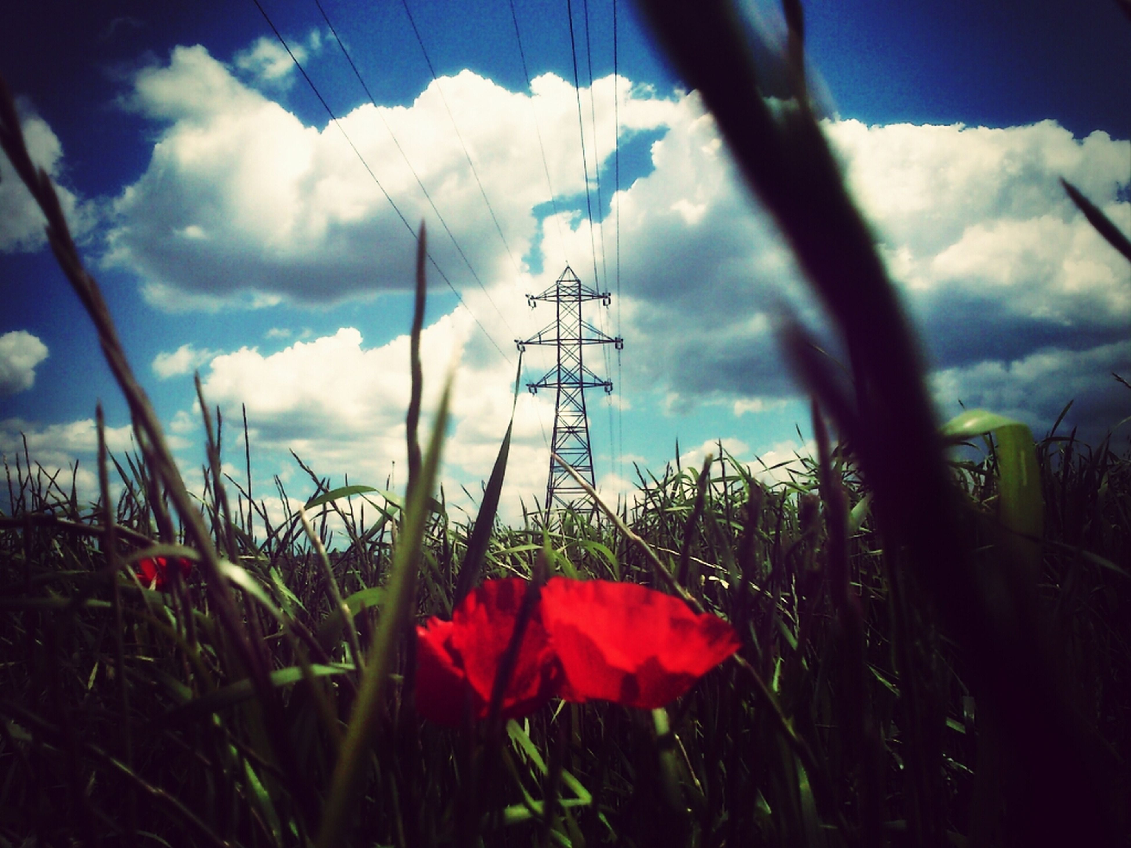 flower, sky, field, growth, plant, cloud - sky, nature, fragility, beauty in nature, freshness, cloud, stem, poppy, landscape, grass, cloudy, tranquility, low angle view, electricity pylon, outdoors
