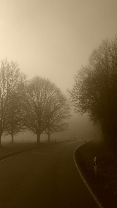 Silence Enjoying Life Bayern Bavaria Fog Fogy Foggy Morning Tree Trees Landscapes With WhiteWall