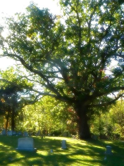 Exploring Trees Cemetary
