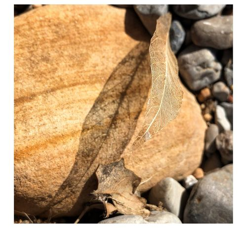 Light And Shadow Leaf Leaf Leaf Dry Autumn Nature Day Close-up No People Outdoors Change Fragility