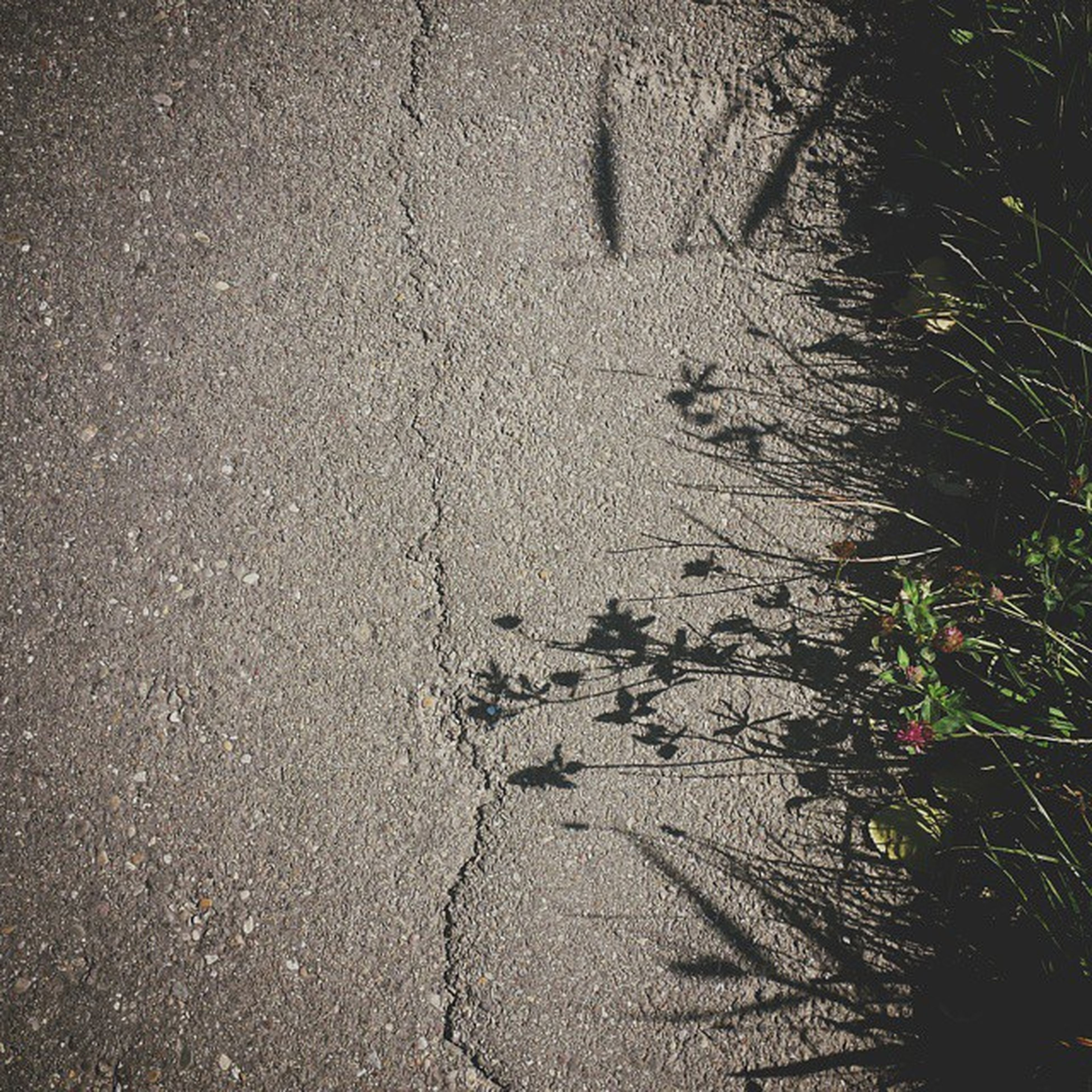 wet, street, water, high angle view, road, nature, sand, asphalt, puddle, outdoors, beach, no people, tranquility, day, sunlight, rain, reflection, plant, growth, shore