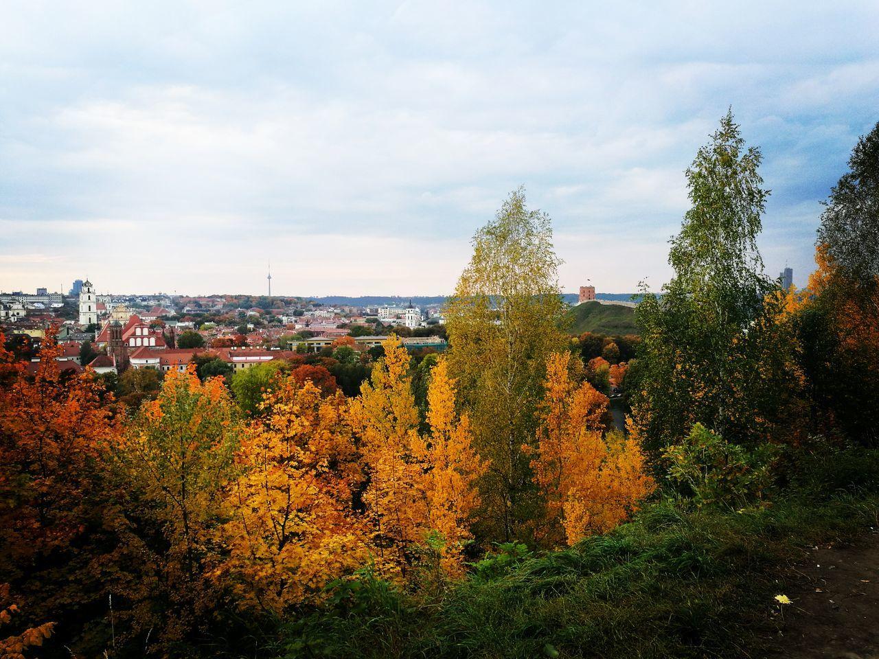 Panoramic Landscape Autumn🍁🍁🍁 Tree Day Vilnius