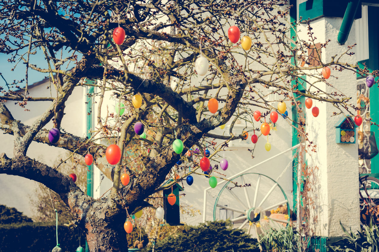Easter Be Happy Branch Colors Day Easter Eggs Hanging Low Angle View Multi Colored Nature No People Ostern Outdoors Spring Springtime Tree