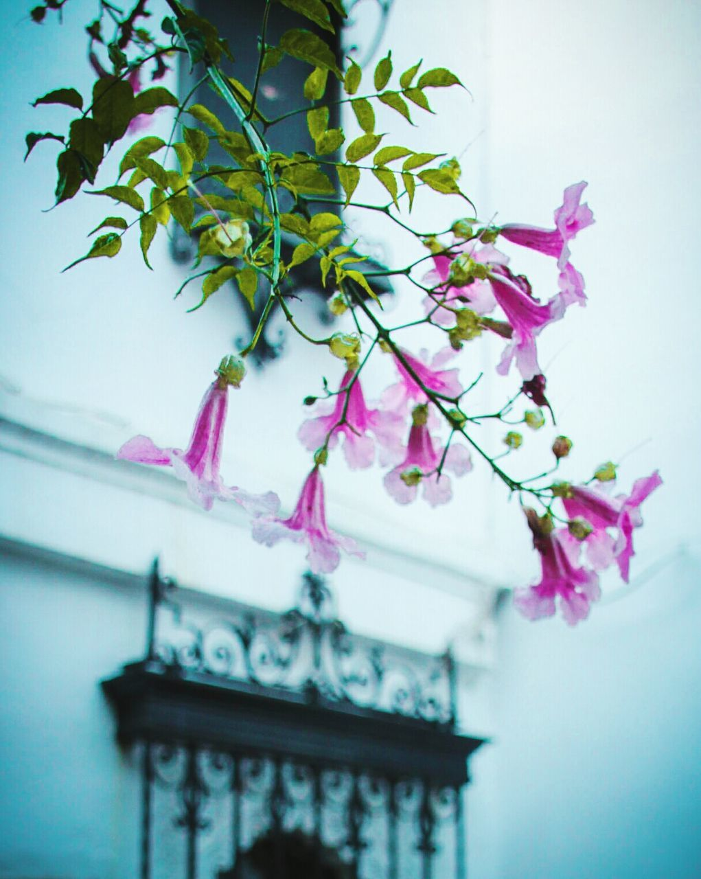 architecture, built structure, low angle view, building exterior, no people, growth, day, pink color, fragility, outdoors, close-up, nature, tree, freshness, sky