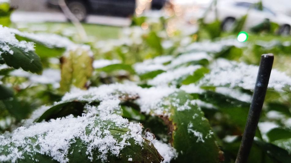 Nature Cold Temperature Close-up Green Color Outdoors Snow Winter Beauty In Nature Focus On Foreground