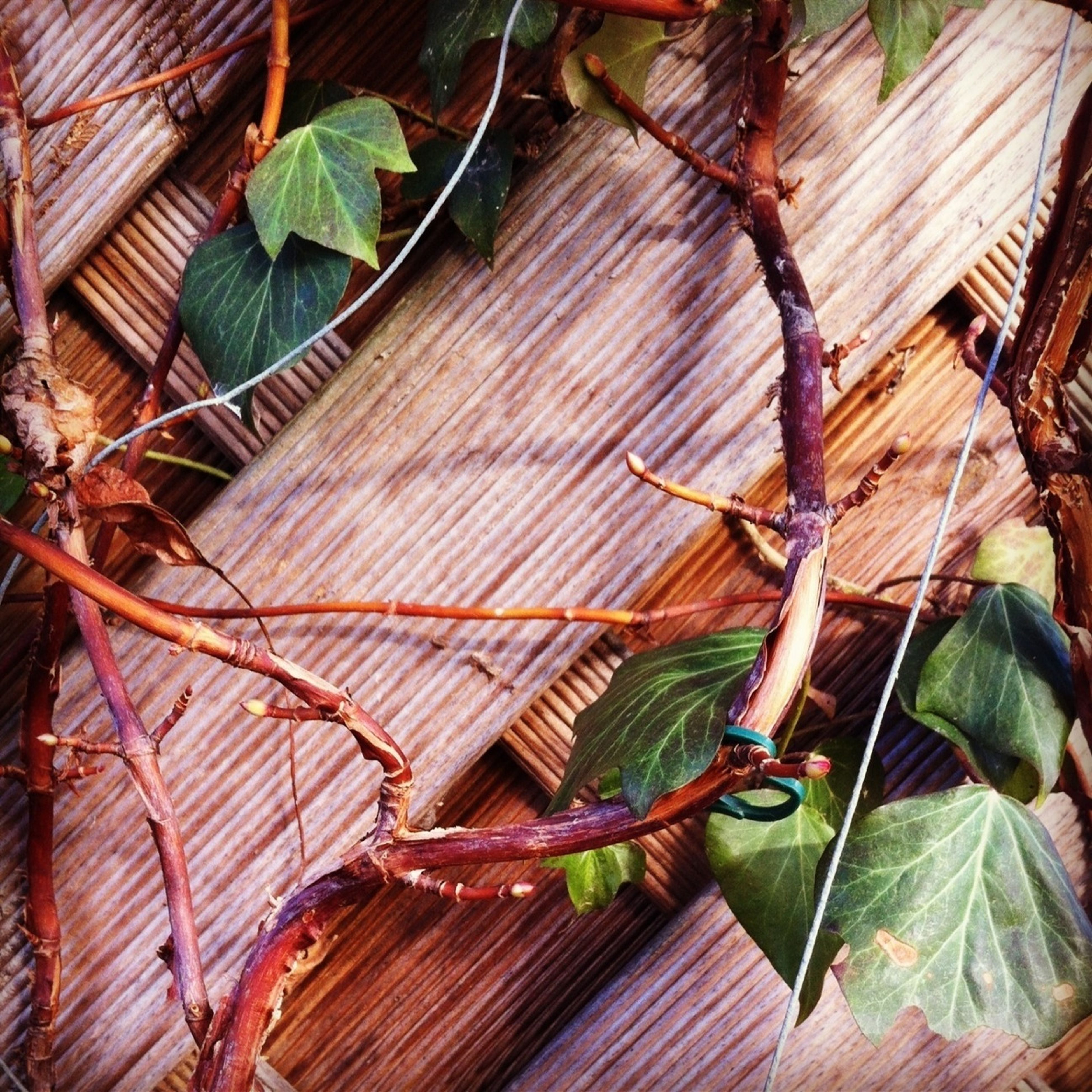 leaf, branch, plant, growth, green color, wood - material, nature, close-up, tree, twig, day, outdoors, no people, sunlight, high angle view, natural pattern, wood, tree trunk, hanging, green