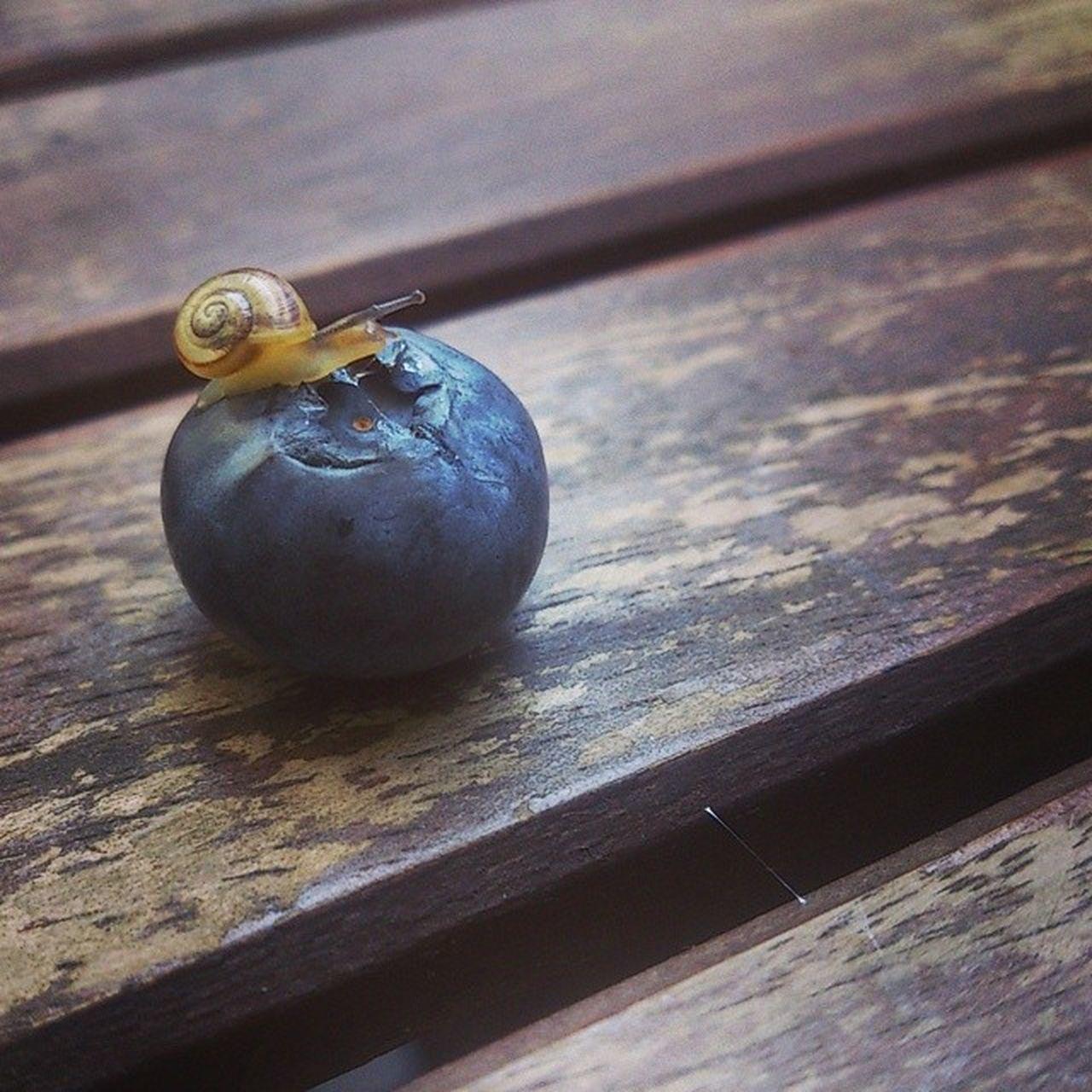 shared my lunch today.. Vegan Hclf Carbthefuckup Iwasntinvited snailsandberries tinytinysnail tinyanimals