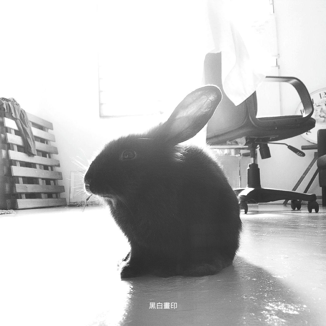 黑白画印 My Rabbit Blavk & White ♡ ♡ Hello World