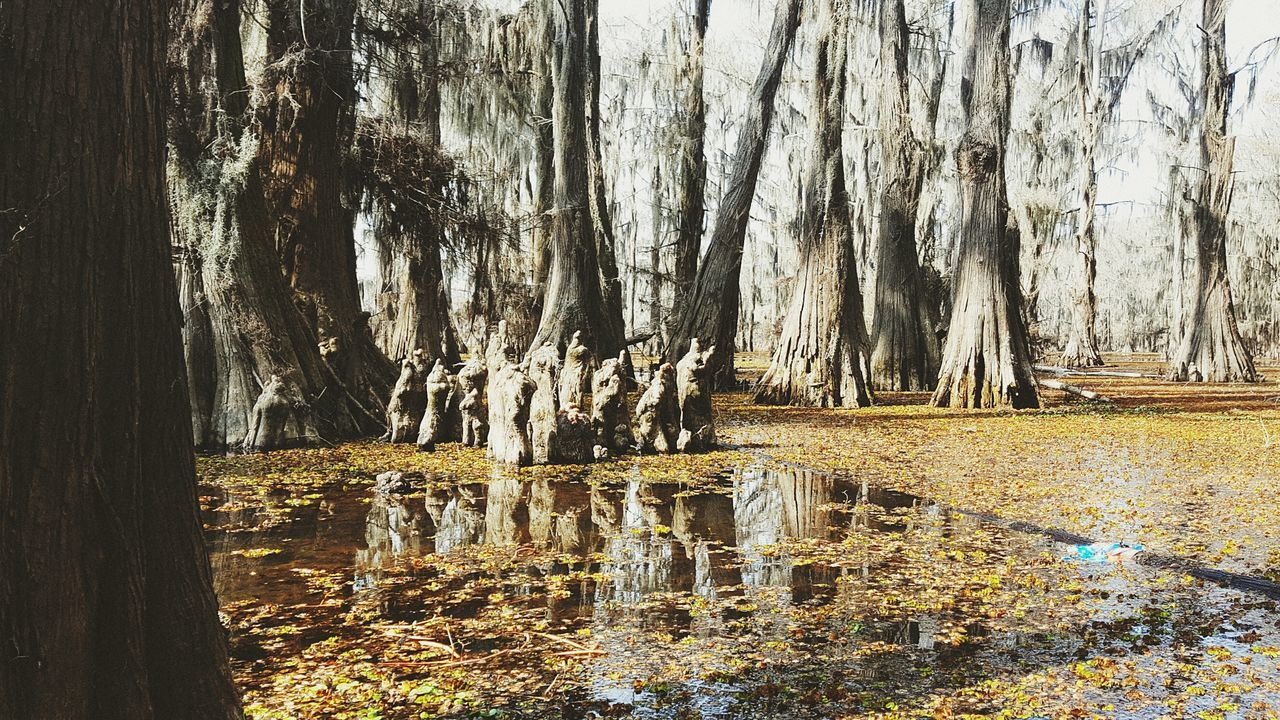 The clergy Tree Scenics Growth Outdoors Water Forest Backgrounds Tranquility No People Nature Caddo Lake Uncertain, TX The Great Outdoors - 2017 EyeEm Awards