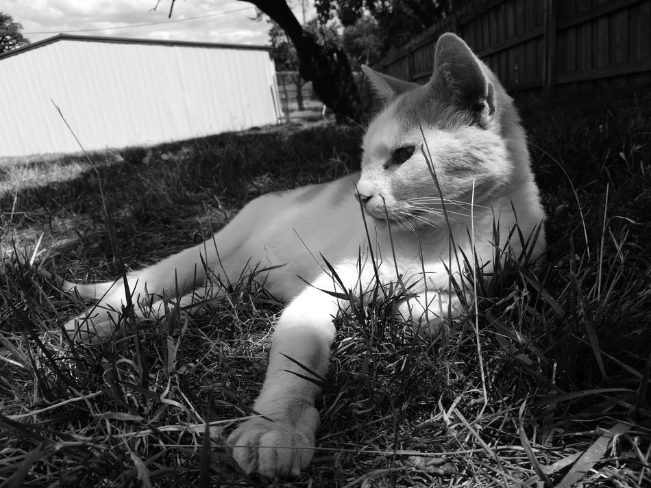 Animal Themes Cat Animal Pets Love Peace And Quiet Grass Blackandwhite Outdoors Freedoom  Life Cats Cat Lovers Cats Of EyeEm Catsoftheworld Animal_collection Light And Shadow Nature Animals Outdoorphotography Outdoor Beauty Cutecats Cute Pets Cat Sweet Memories LoveNature