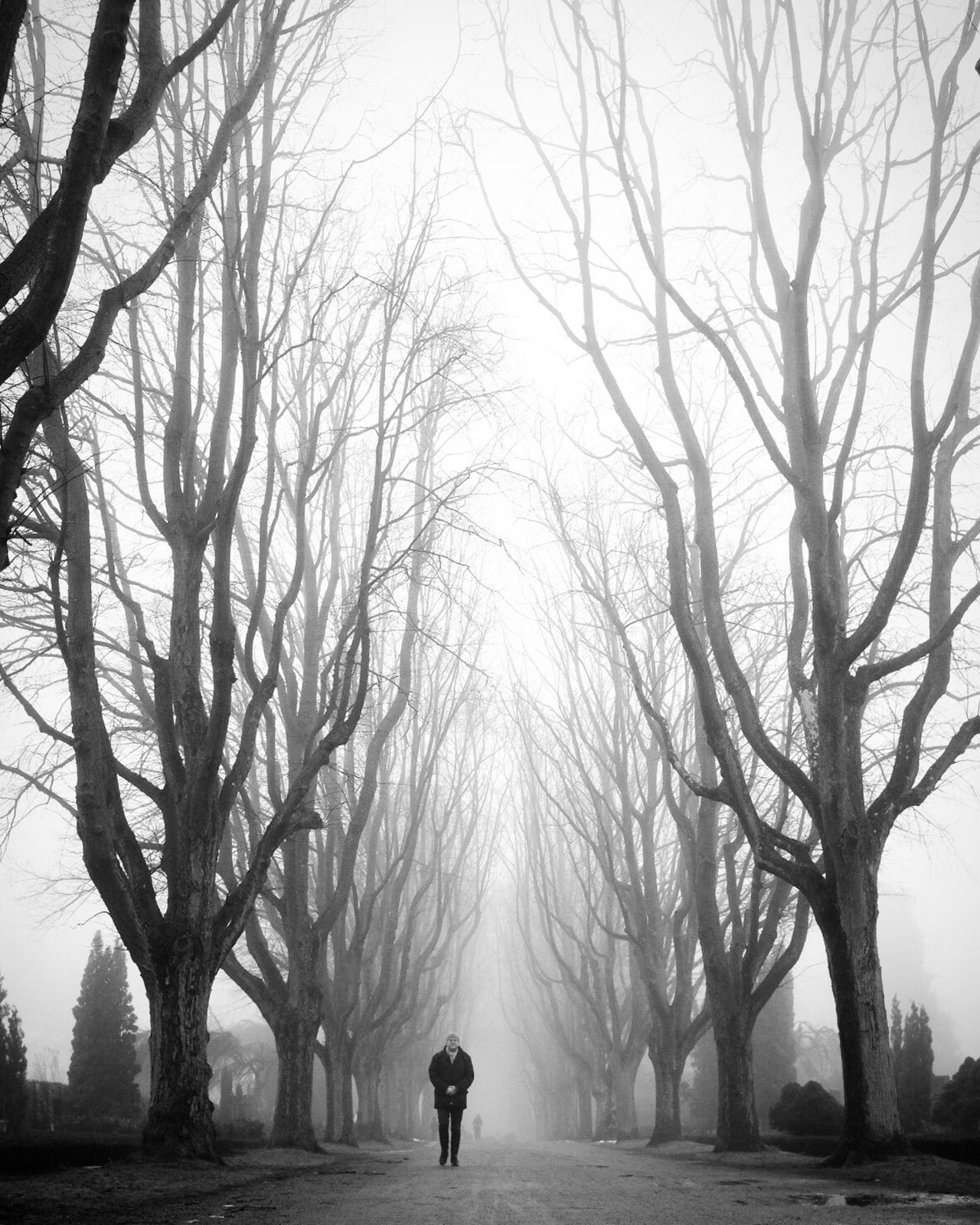 Bare Tree Tree One Person Fog Beauty In Nature Winter Cold Temperature Black And White Bw_collection Monochrome Shootermag