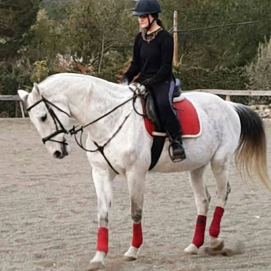 Más bonito imposible!♡ Dressagelove Dressage Dressagerider Horsestagram Horsefollowers Horserider Equine Equestrianlife Cheval Chevaux BIG Verybig Beautiful White Tarantino Equine