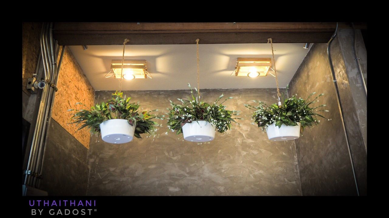 illuminated, plant, indoors, lighting equipment, growth, no people, flower, night, nature