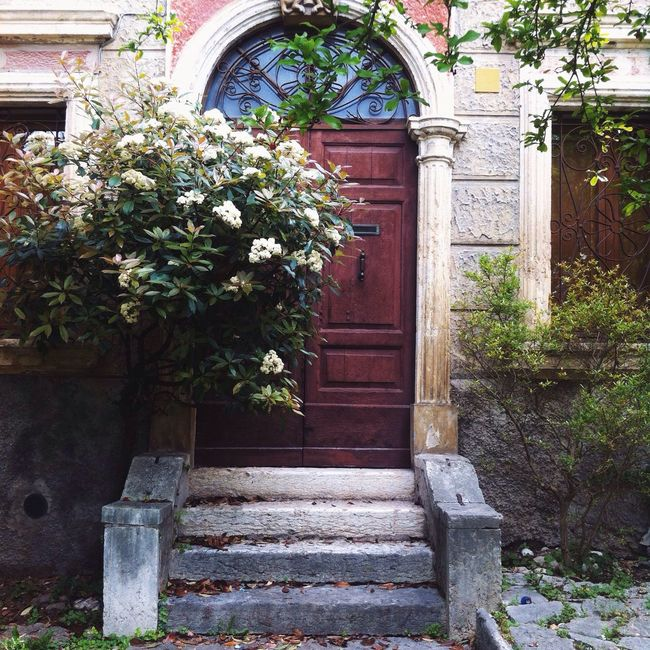 Door Entrance Entrance Door Old Door Old Old Buildings Steps Stairs Wood Door Outdoors Closed The Way Forward Tree Flowers Trees Nature Built Structure Facades Facade Building Doors Doorway Verona Italy Verona Italy