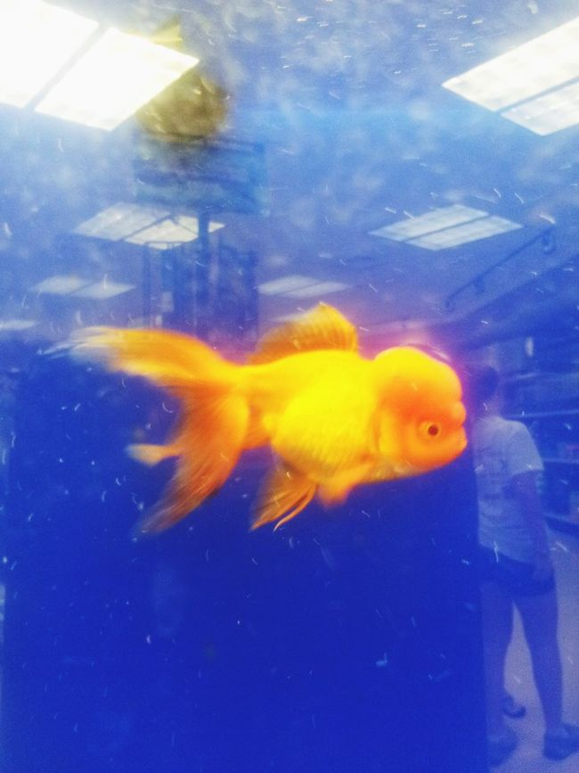 """The """"Donald """" ??? Political fish Imposter!!! Trump President"""
