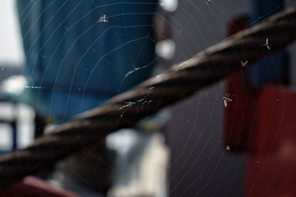 Spider Web Spider Focus On Foreground Close-up No People Fragility Outdoors Water Day Nature Spiderworld Spiders Spiderweb Spider Nautical Vessel Red Harbor Boat Deck Star Trail