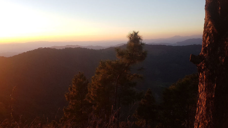2 - 1 - The foothills form the Himalayas.That is Honestly a great feeling. Beauty In Nature Day Fog Foothills Of The Himalayas Forest Landscape Mountain Mountain Peak Mountain Range Nature No People Observation Point Orange Sky Outdoors Pinaceae Pine Tree Pine Wood Pine Woodland Scenics Sky Sunset Tranquility Travel Destinations Tree Winter
