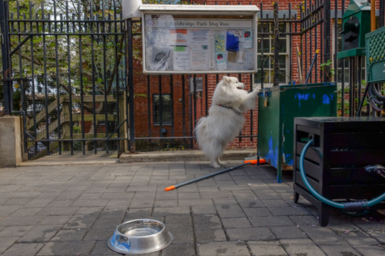 animal themes, domestic cat, one animal, domestic animals, pets, mammal, feline, day, outdoors, no people, architecture