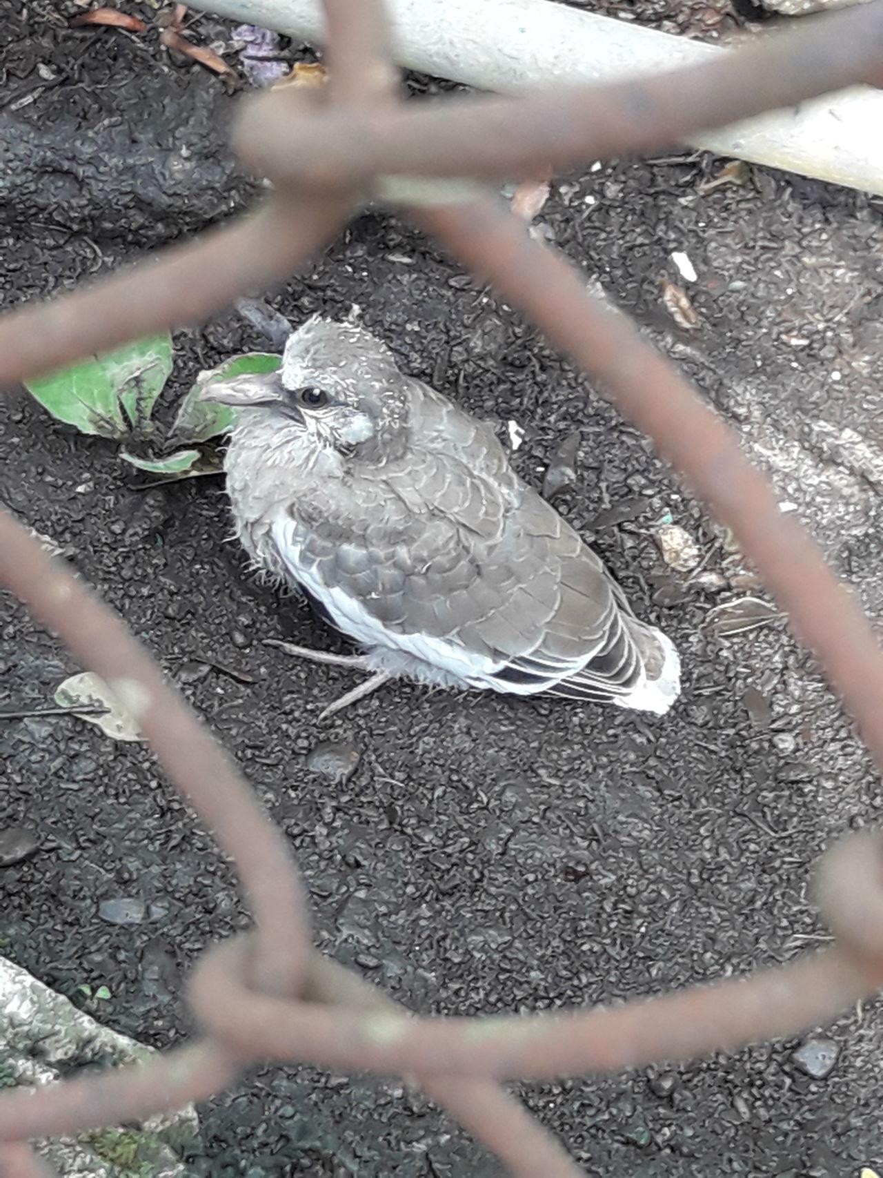 Aves Nature Photography Outdoors Spring Spring Birds En Mexico