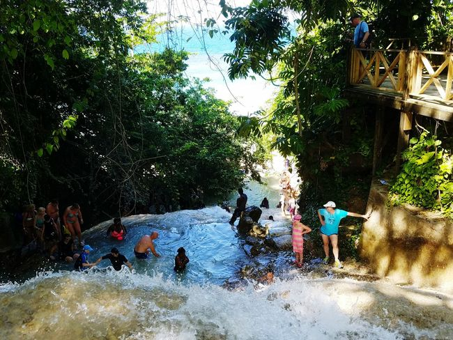 Dunns river falls Tree Water Person River Enjoyment Day Vacations Growth Nature Tranquil Scene Beauty In Nature Scenics Riverbank Tranquility