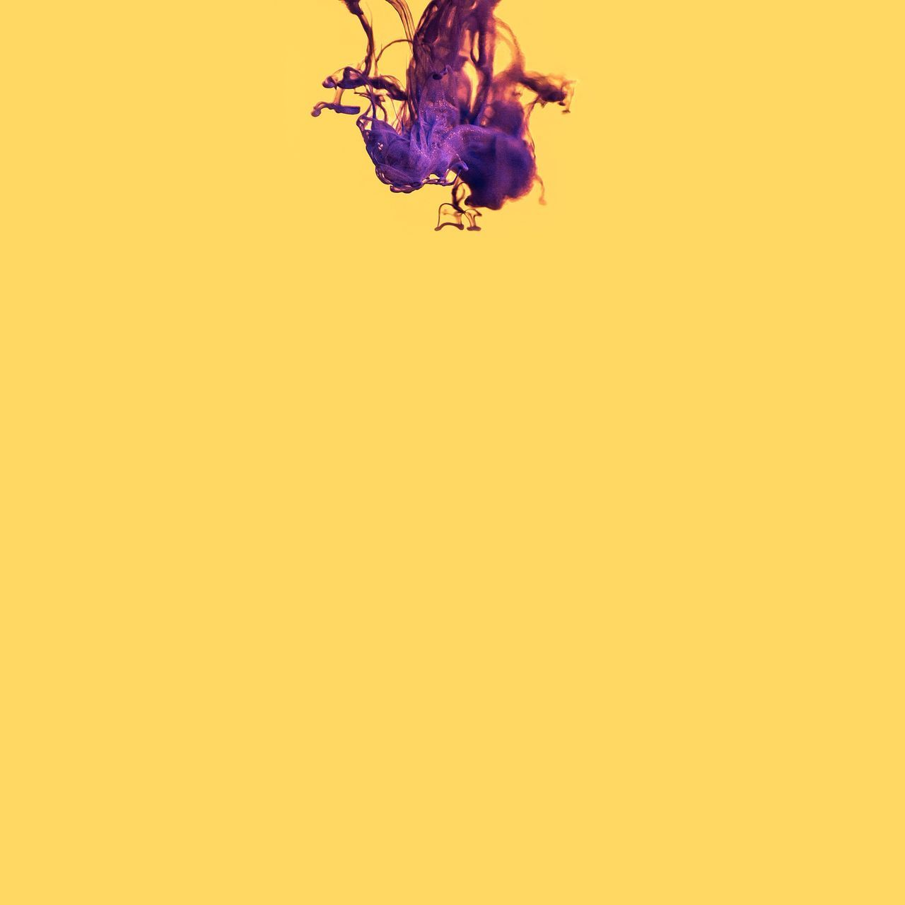 Yellow Mid-air Studio Shot Abstract Flying Motion Yellow Background Vitality Colored Background Ethereal Backgrounds Multi Colored Fragility No People Close-up Dissolving