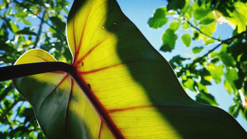 Beautiful stock photos of costa rica, Beauty In Nature, Close-Up, Costa Rica, Day