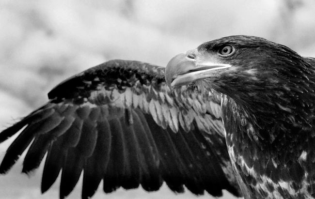 Blackandwhite Wildlife Birds Nature Portrait Clouds And Sky Popular Photos