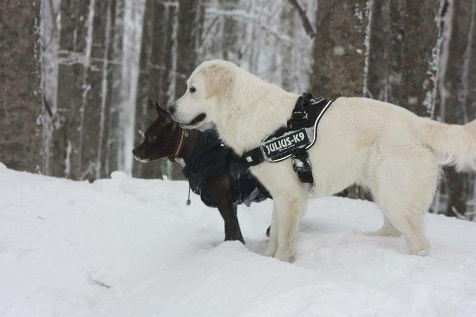 Wintertime Parcodelleforestecasentinesi Neve Friends Natura Sempreingiro