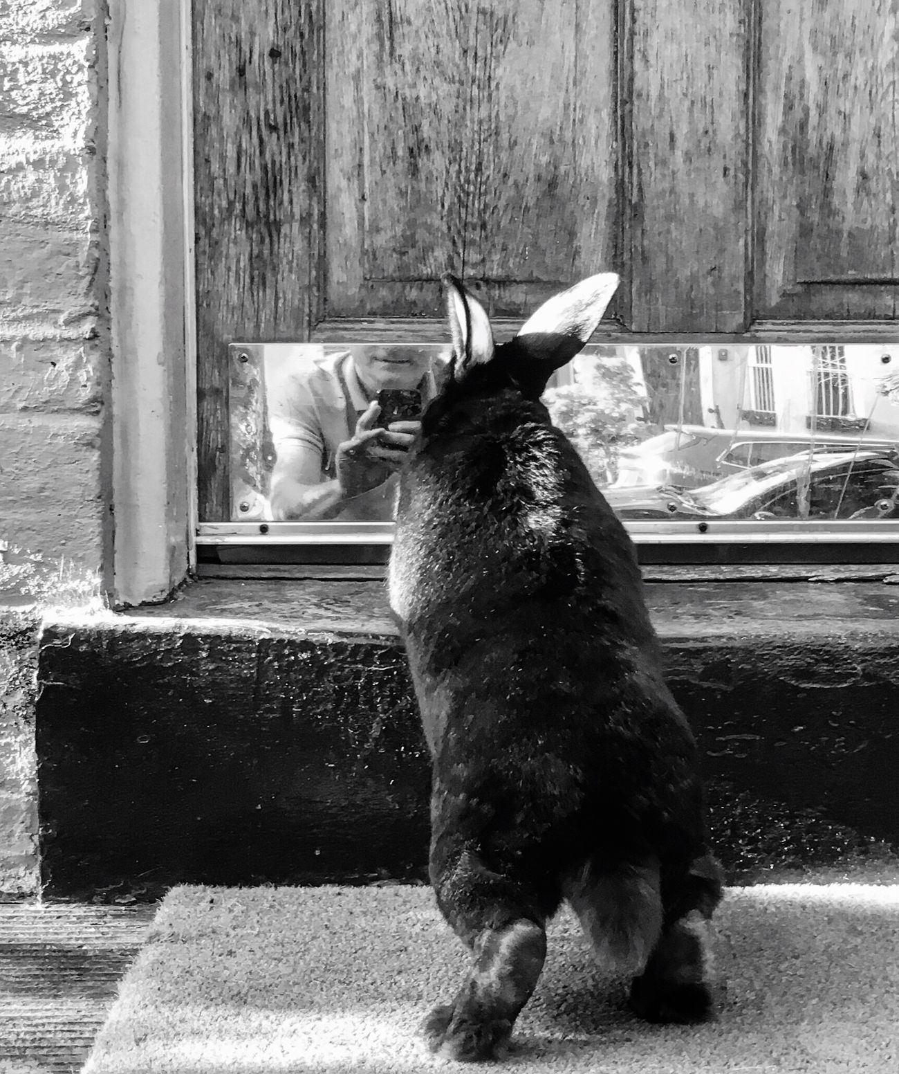 Please let me back in Bunny  Rabbit Streetphotography Blackandwhite From My Point Of View Eye4photography  Bnw
