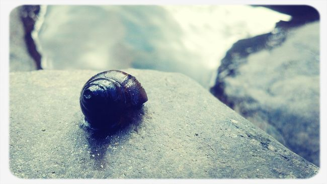 Snail Shell at Island Park. Water Nature
