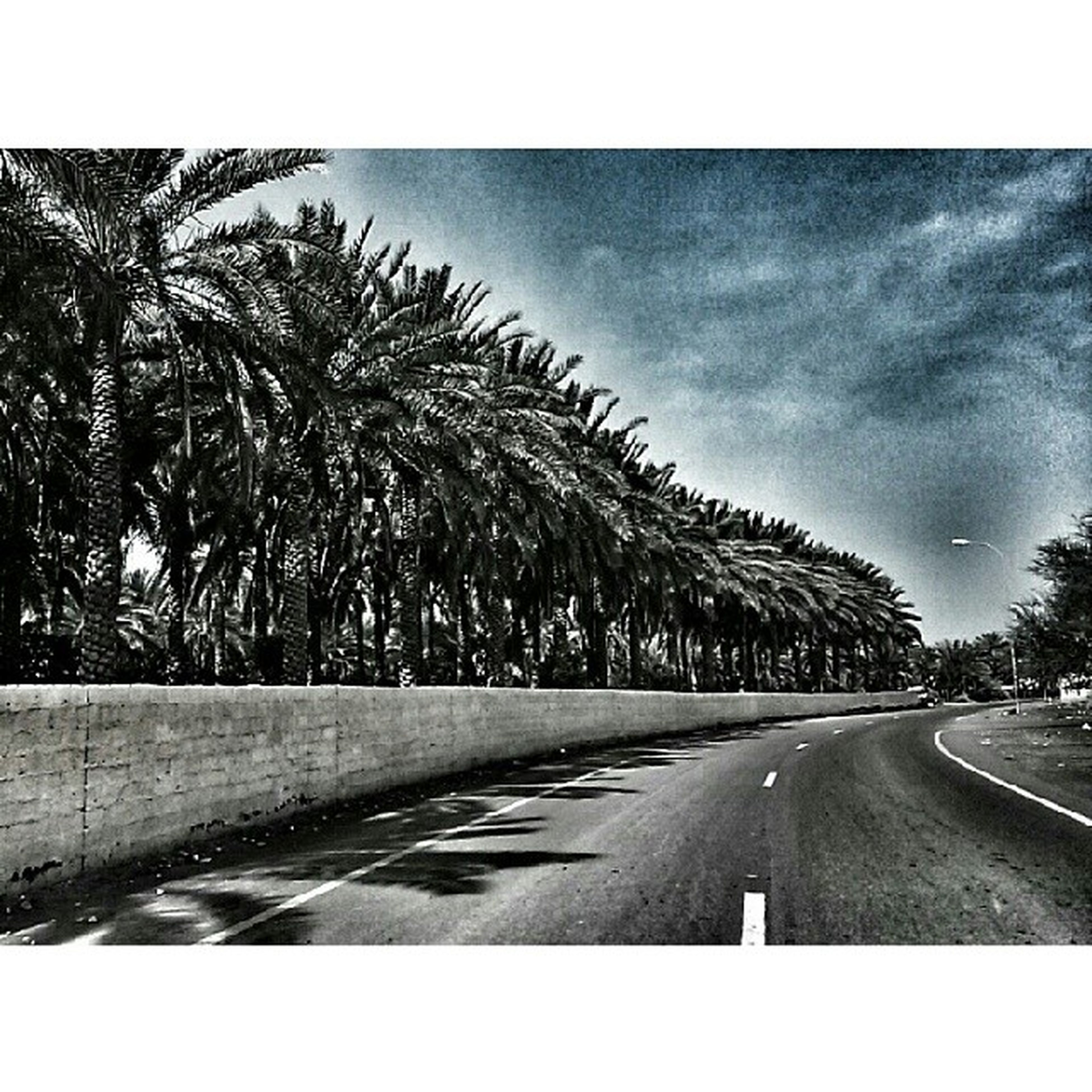 road, transportation, the way forward, road marking, transfer print, diminishing perspective, tree, sky, vanishing point, auto post production filter, street, country road, asphalt, empty road, palm tree, long, cloud - sky, car, nature, outdoors