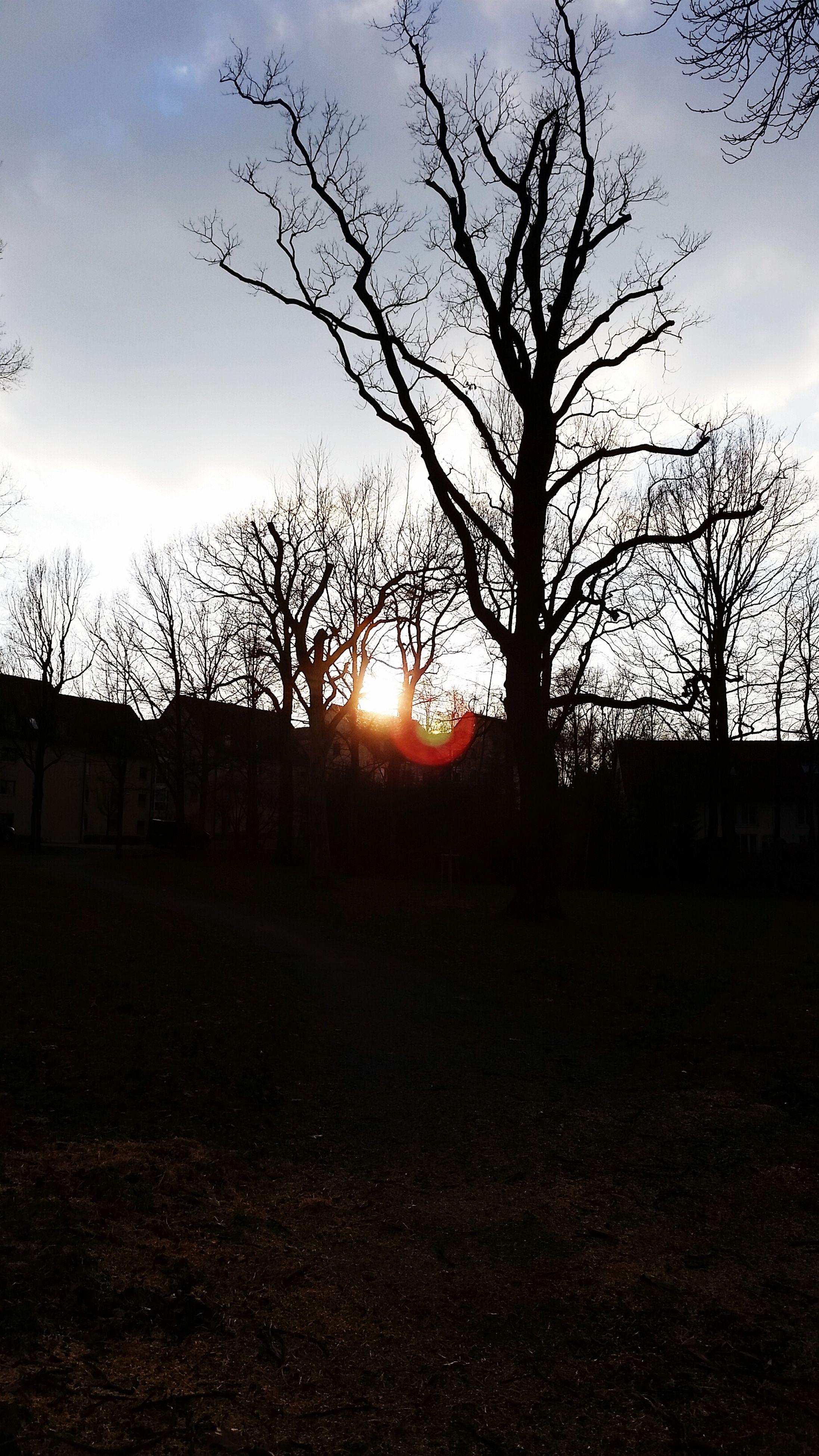 sunset, bare tree, silhouette, tree, sky, sun, tranquility, tranquil scene, scenics, landscape, beauty in nature, nature, field, branch, cloud - sky, sunlight, orange color, idyllic, back lit, no people