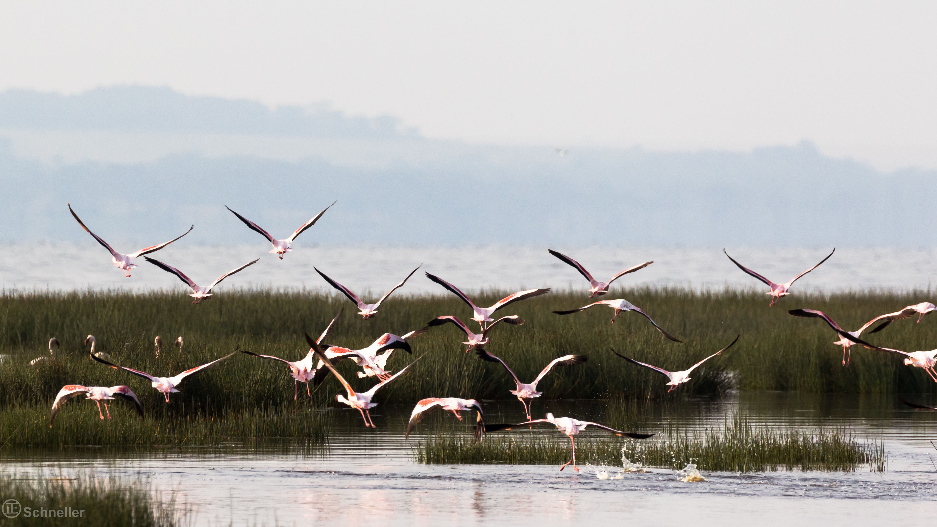 animal themes, bird, flying, animals in the wild, water, wildlife, spread wings, flock of birds, lake, seagull, togetherness, tranquility, zoology, sky, non-urban scene, nature, tranquil scene, waterfront, beauty in nature, migrating, mid-air, perching, sea, shore, day, scenics, water bird