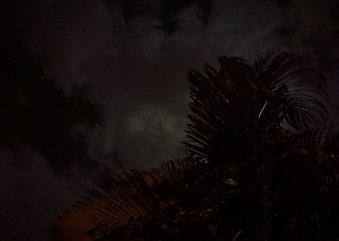 night, nature, no people, beauty in nature, low angle view, sky, palm tree, growth, close-up, tree, outdoors