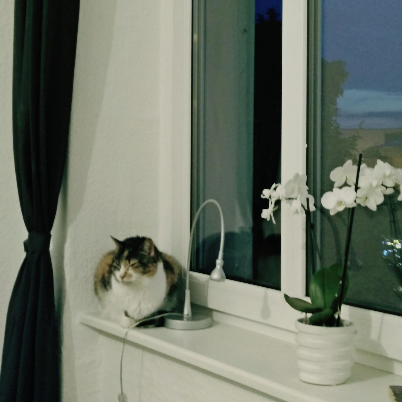 Nachtkatzencontent