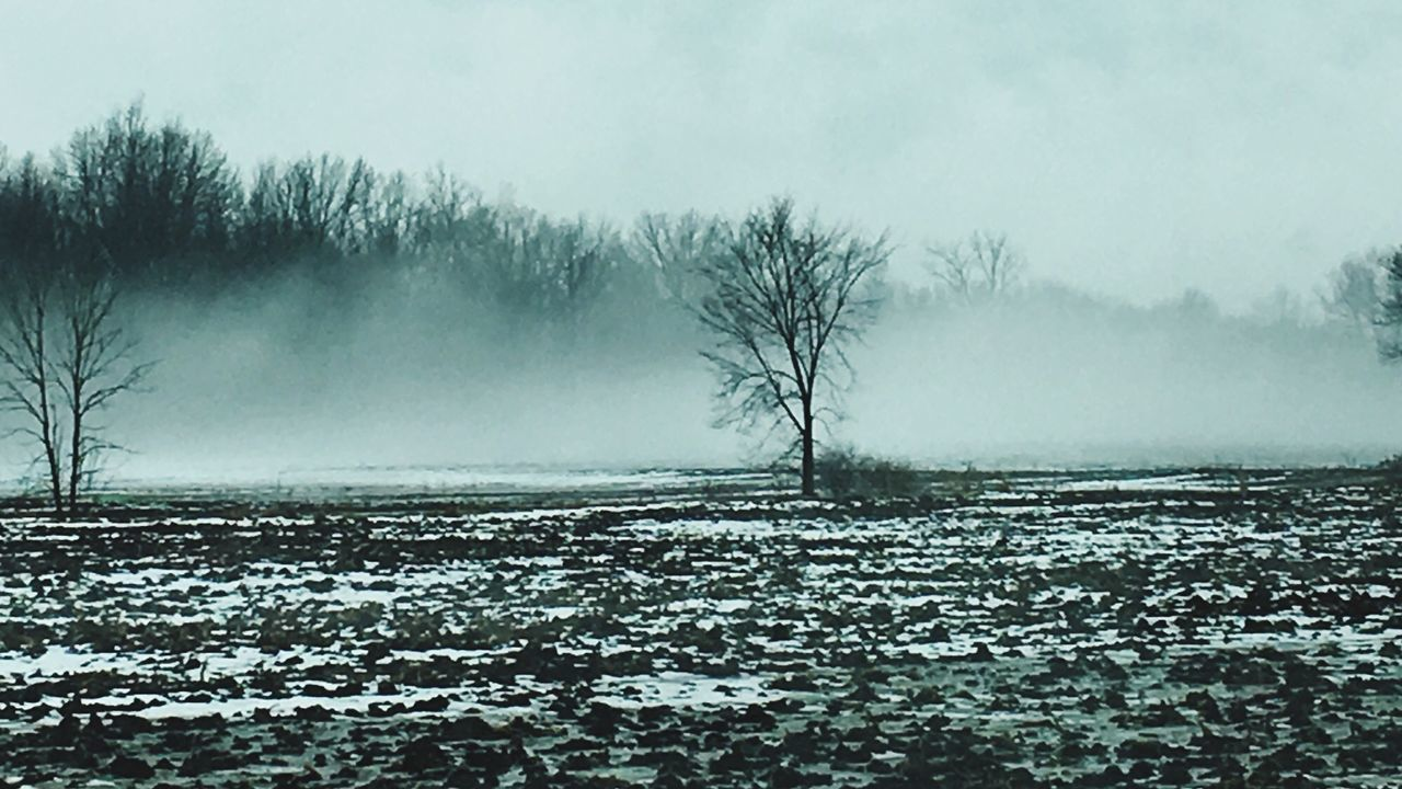 winter, cold temperature, tranquility, snow, nature, tranquil scene, landscape, beauty in nature, weather, cold, solitude, scenics, remote, outdoors, bare tree, day, no people, frozen, tree, sky