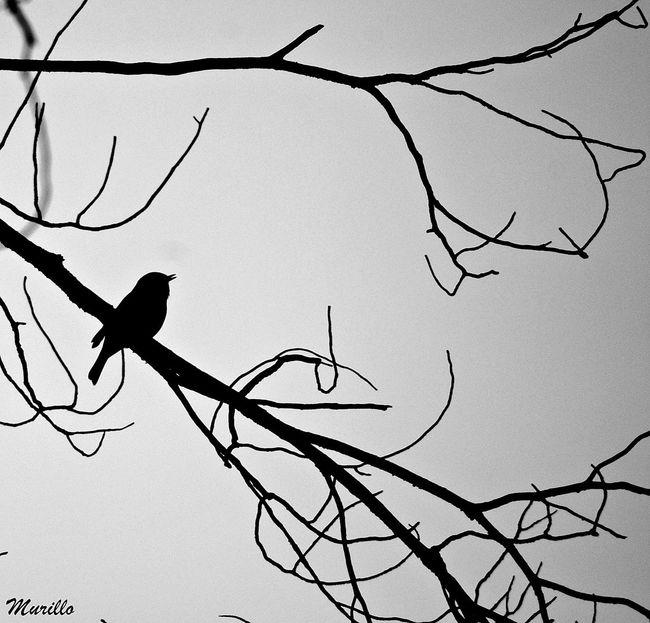 Robin Petirrojoeuropeo Petirrojo Aves 🐥🐤🐥 Nikonespaña NikonD60 Nikonphotography Animal Wildlife Nature Animals In The Wild Bird Aves Bird Photography