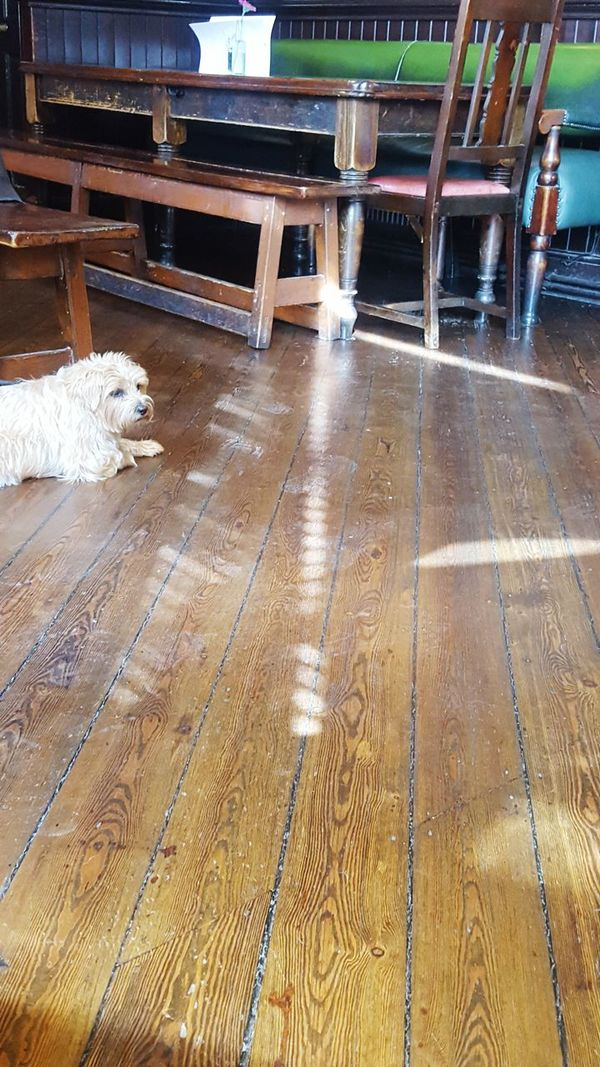 Pub Dog  at 5he 'sloaney-pony' Parsons Green