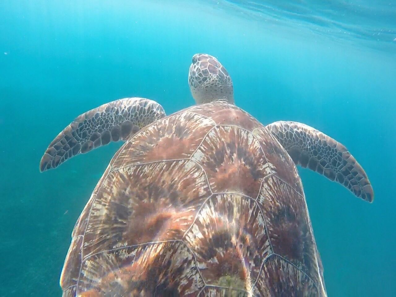 Travel Destinations Martinique Underwater Turtle Sea Life Animal Themes Sea Swimming Animals In The Wild UnderSea Water One Animal Nature Animal Wildlife Beauty In Nature No People Close-up Sea Turtle Day Outdoors https://youtu.be/2fYSAutD-zU