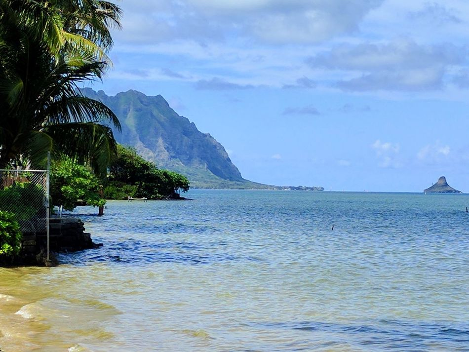 view from laenani neighborhood park Water No People Beauty In Nature EyeEm Nature Lover Taking Photos Outdoor Photography Clouds And Sky Tropical Paradise Koolau Mountains Mountains Pacific Ocean View Postcard Coconut Trees Outdoors Nature Oahu Ocean View Pacific Ocean Beautiful Day