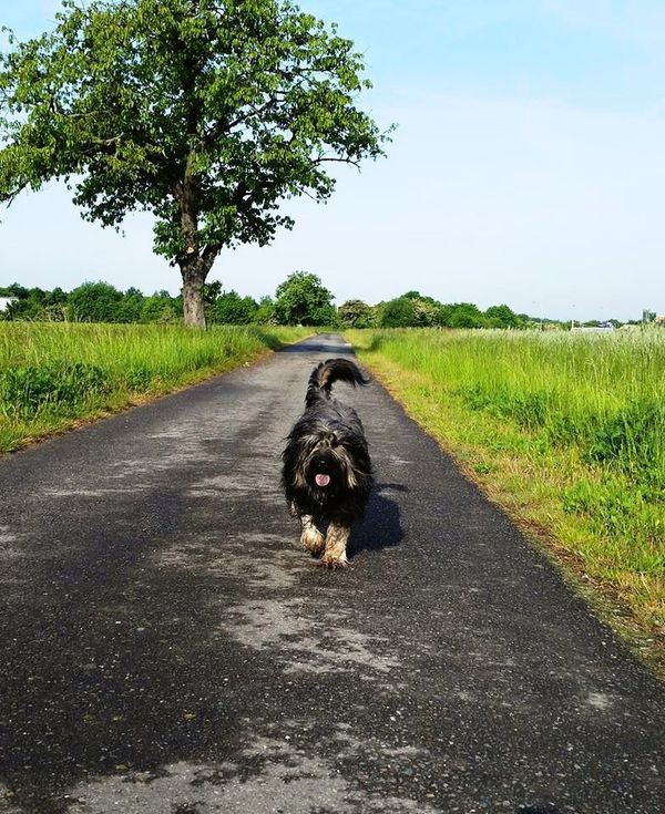 Bentjesgosaugustin Gos D'atura Dog Walking Ilovemydog Mydog I Love My Dog Dog Nature Landscape