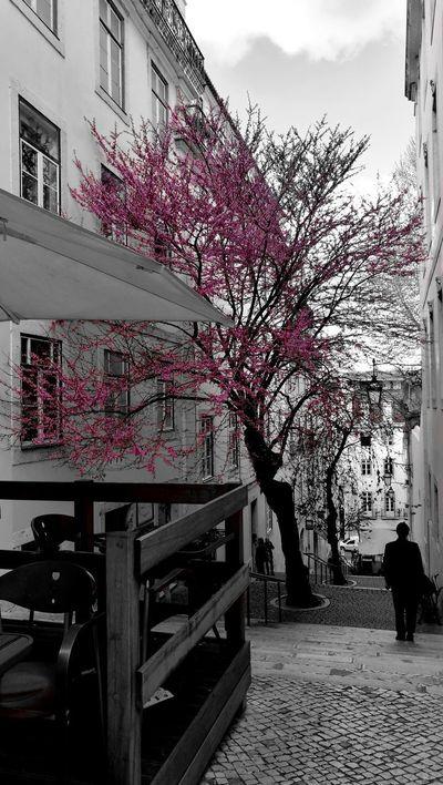 Lisbon Lisboa Lisbonlovers Outdoors Day City Spring Springtime Spring Flowers Huawei HuaweiP9 Capturedonp9 Leicalens Leicalove P3top